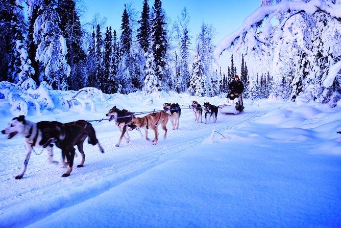 Dog Sledding and Mushing Experience