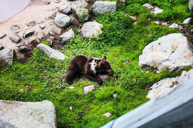 Visit Ranua Arctic Wildlife Park