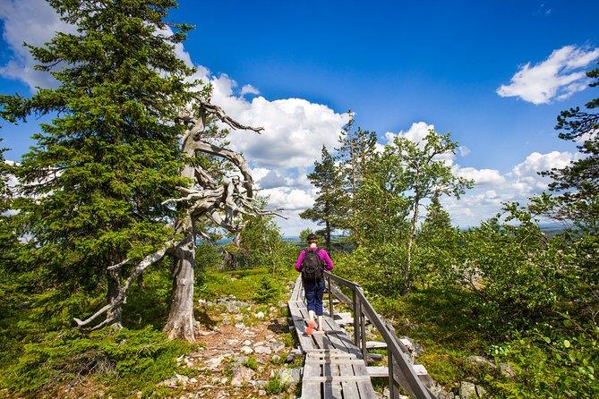 Day Trip to Korouoma Canyon from Rovaniemi