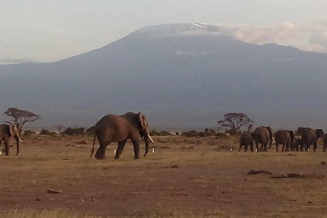4 Days Safari to Amboseli N/P.