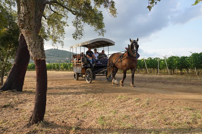 Carriage through the vineyards in Suvereto and organic wine tasting