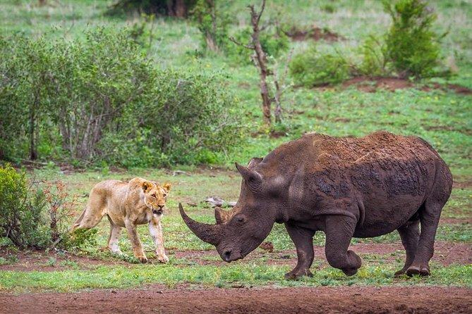 Rhino and Lion Nature Reserve Safari Tour from Johannesburg