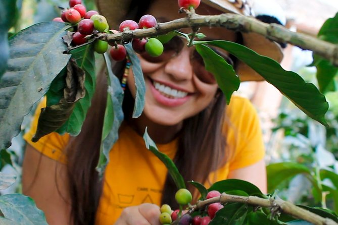 Authentic Coffee Farm Experience from Bogota • Private & All Inclusive • 11h