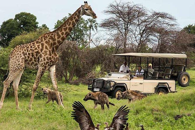 Cape town private Tour - The Best of Big five safari
