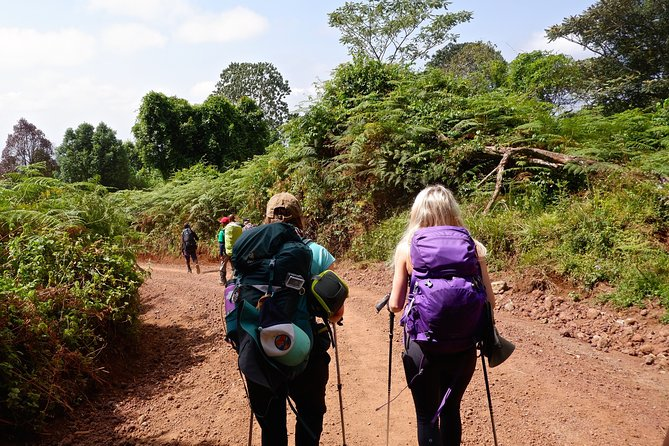 Joy Climbers - One Day Hiking on Mount Kilimanjaro to Mandara Hut photo 2