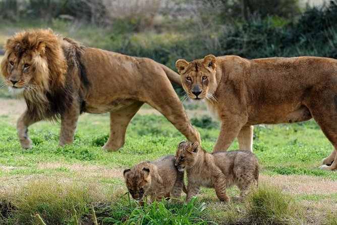 Half-Day Private Guided Safari Tour of Lion and Safari Park