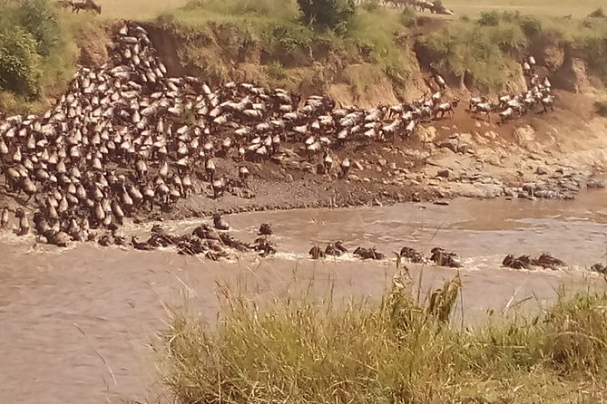 Enjoy the Wildebeests Crossing Mara River with Nile Crocodiles in Maasai Mara during the Annual Migration between July and September.