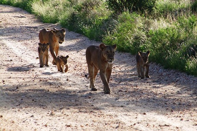 7 Days Safari Tour from Mombasa