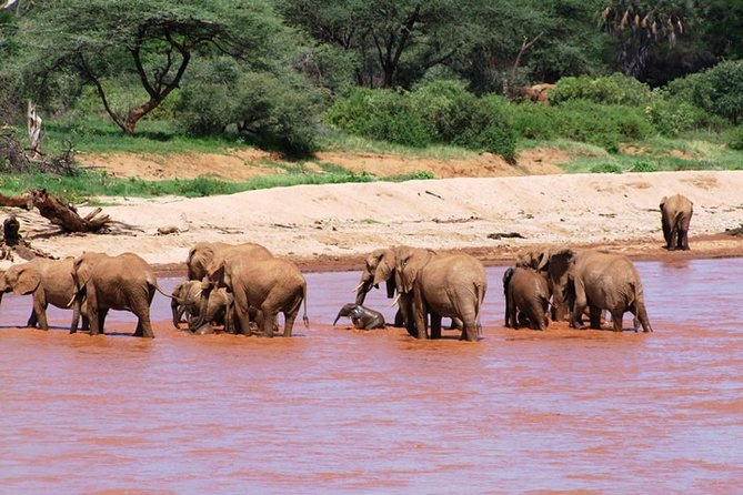 2.5 days Tsavo East and Ngutuni