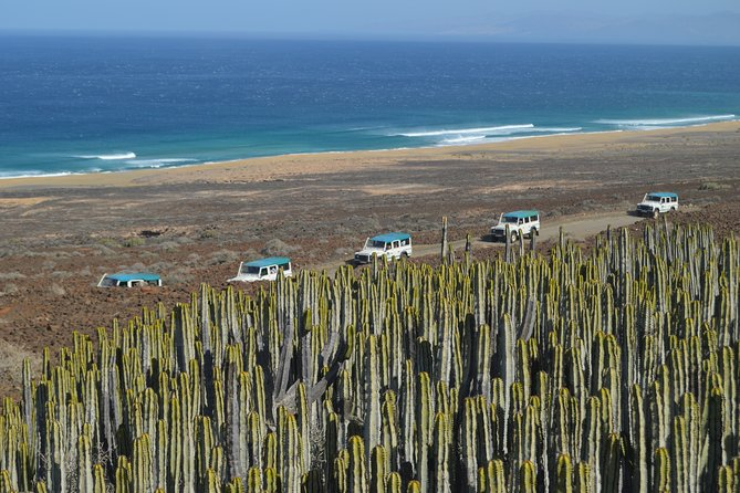 Jeep Tour to Cotillo and Northern Area of Fuerteventura