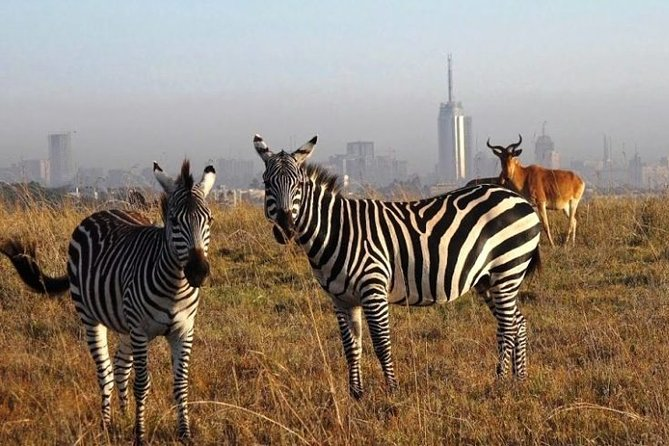 Half-Day Game Drive in Nairobi National Park with Hotel Pickup