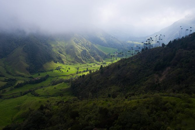 Cocora Valley on a Jeep & Hike Day Tour