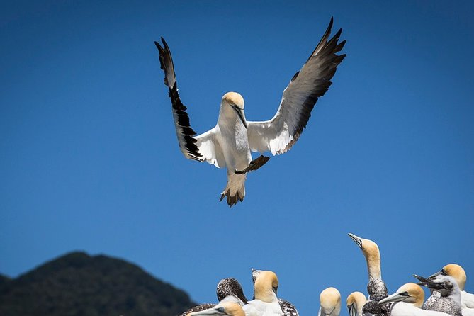 Bird Watching and Dolphin Eco-Tour from Picton