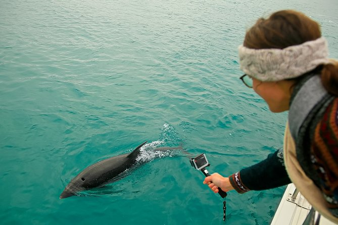 Dusky Dolphin Watching