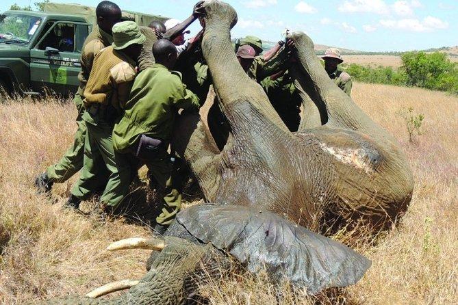 6 nights 7 days Masai Mara budget safari.