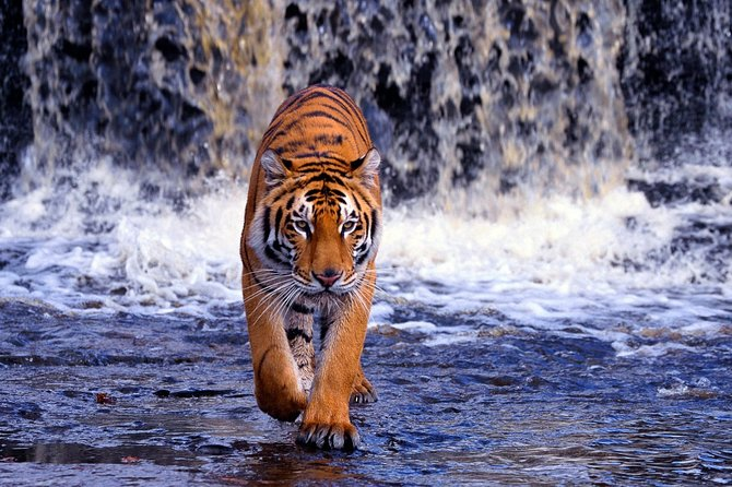 7-Day Golden Triangle Tour with Ranthambore Tiger Tour(Taj Mahal Sunset/Sunrise)