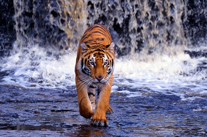 8-Day Golden Triangle Tour with Ranthambore Tiger Tour(Taj Mahal Sunset/Sunrise)