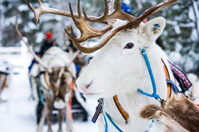 All Day Reindeer Adventure