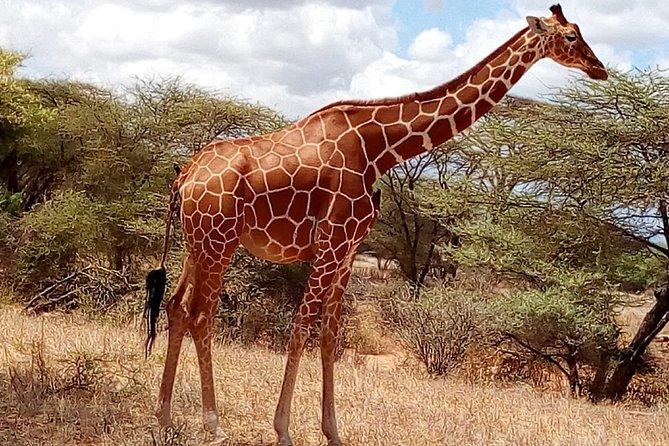 2-Day Maasai Mara National Reserve Safari from Nairobi