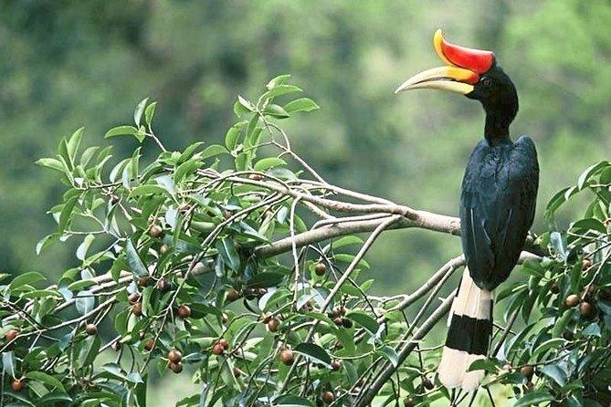 Bird watching in Temenggor nature reserve