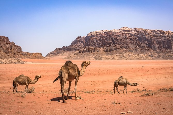 Wadi Rum Tour with Camp Overnight Bedouin Experience | 2 Days | Meal Included