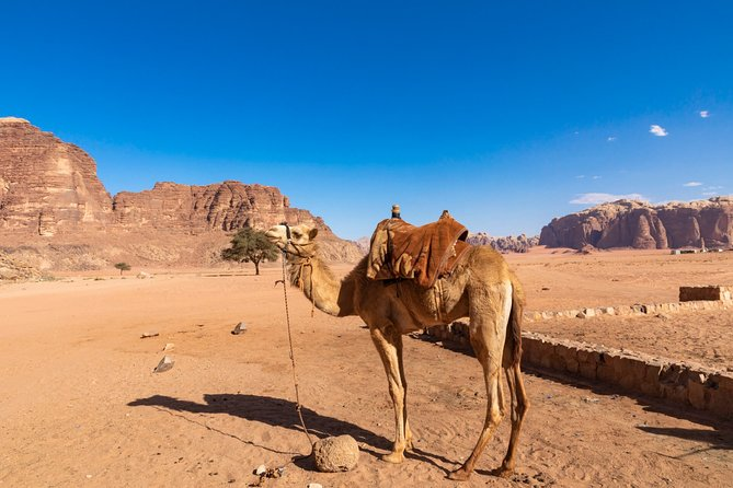 Full Day Jeep Tour in Wadi Rum Desert | Guide | 7 hours | lunch included