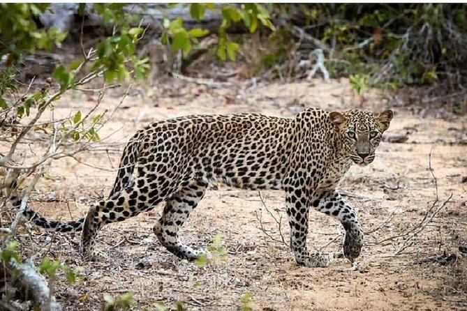 Yala Safari Day Tour From Bentota