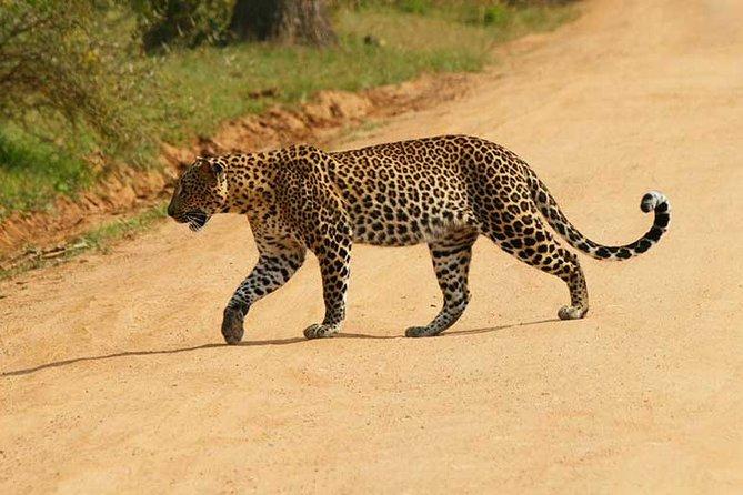 Yala Safari Day Tour From Induruwa