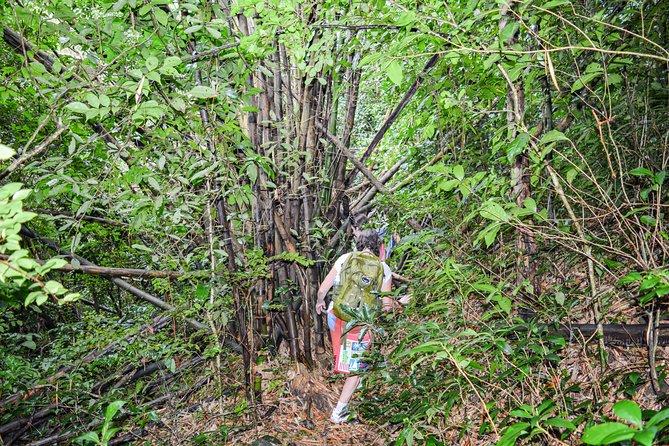 Mount Obama Hiking Adventure