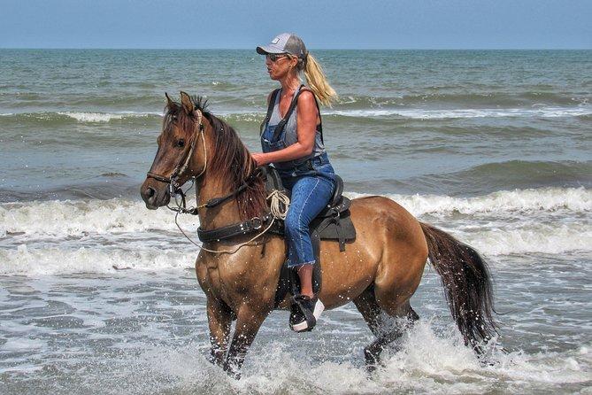 Horseback riding tour in a Colombian Paso fino horse