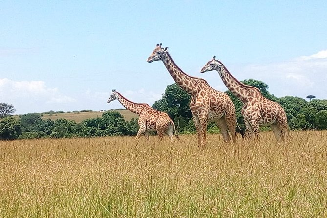 2-Day Private Guided Safari of Lake Nakuru Park from Nairobi