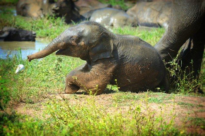 Udawalawe National Park   Full Day Safari Tour