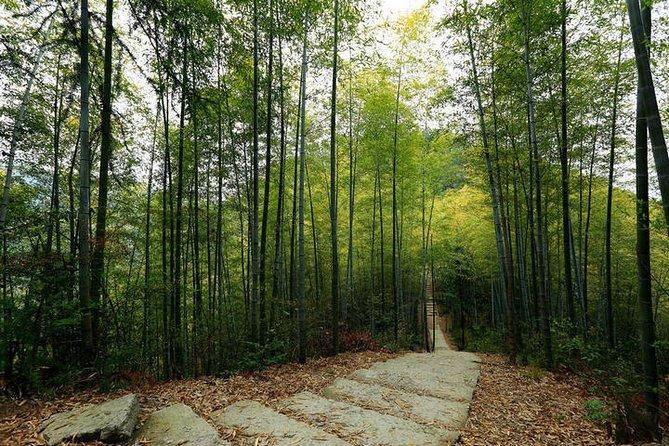 Huangshan Mukeng Bamboo Forest