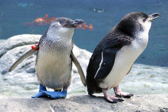 International Antarctic Center General Admission Ticket