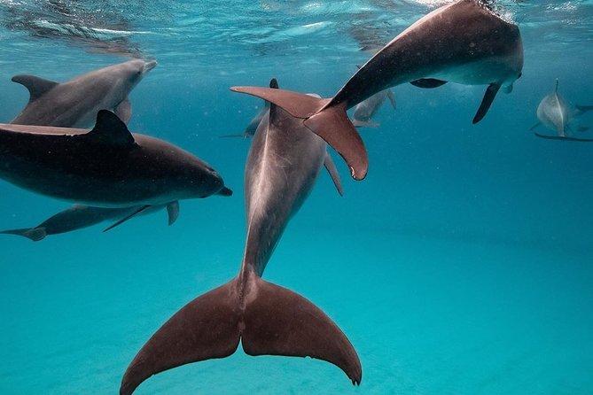 Swim with Wild Dolphins in Zanzibar Private Tour with Pickup