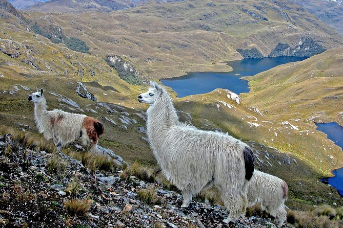 Private Trekking Full-Day Tour at Cajas National Park