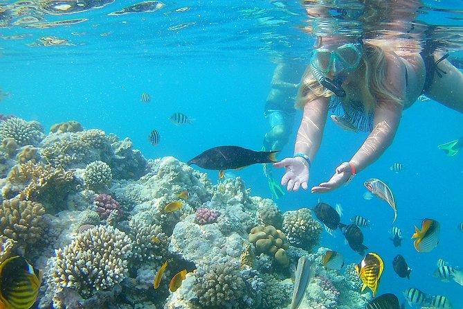 Carnival Super Snorkeling Full Day Hurghada