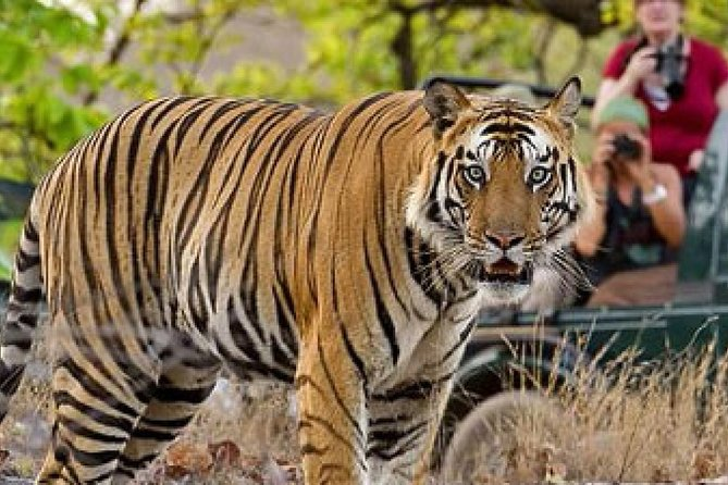 4-Day Private Tour of Delhi Agra and Jaipur with Tiger Safari