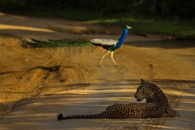 All Inclusive Private Safari at Yala and Bundala National Parks with Lunch