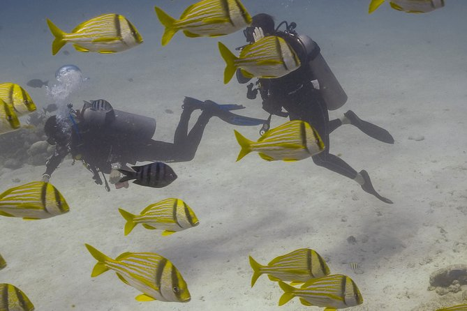 Multi Experiences Package - Summer Diving