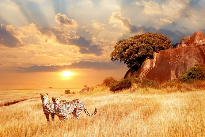 14-Day Guided Safari Tour from Kenya to Tanzania with Meals