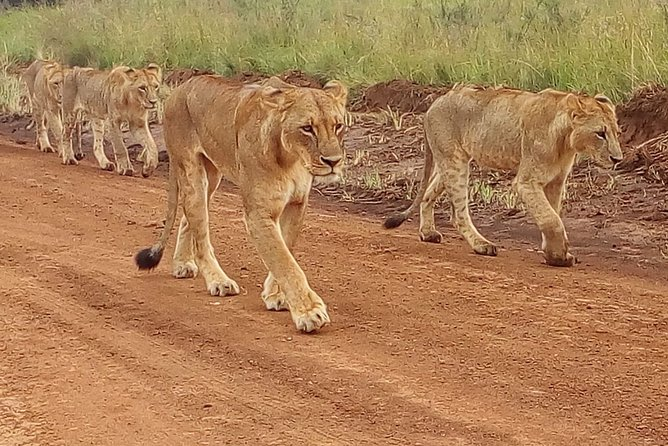 4-Day Tsavo East West and Amboseli National Park from Mombasa
