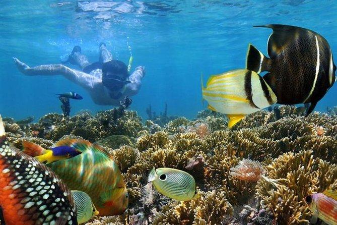 Snorkeling at Mnemba Island