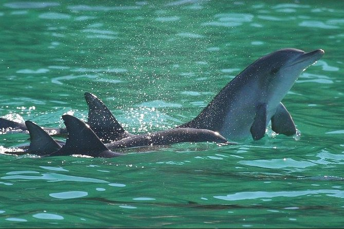 Dolphins and Jozani National Park Private Tour in Zanzibar