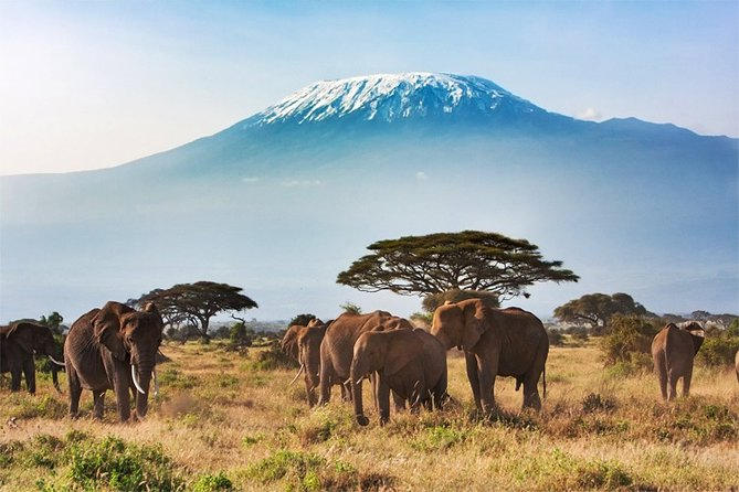 3 Days, 2 Night - Amboseli National Park Safari