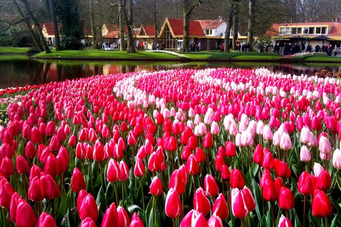 Tulip Fields and Dutch Countryside Full-Day Tour