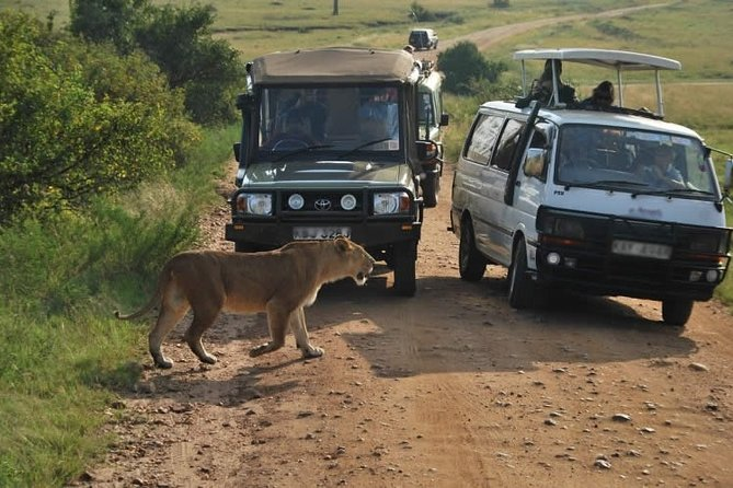 Private Tour: Nairobi Airport Layover Half Day Tour to Nairobi National Park