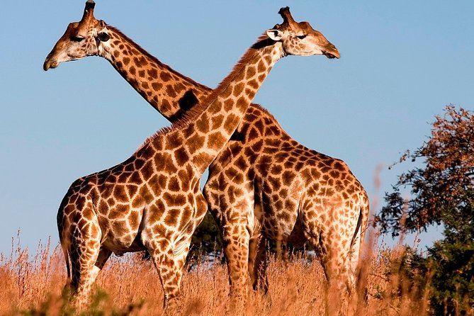 Nairobi Airport Layover: Covid-19 Safe & Private Tour to Nairobi National Park