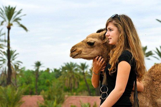 Atlas Mountains Day Trip & Camel Ride