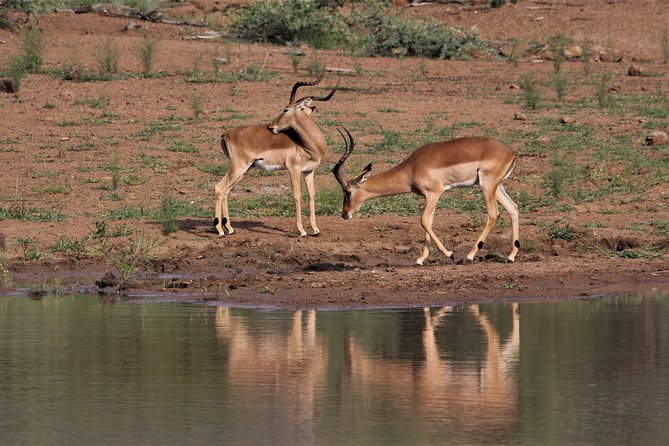 Guided Wildlife Watching Experience in Tarangire National Park
